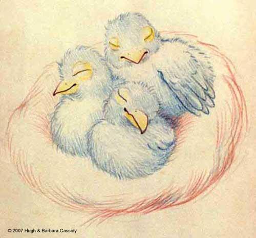 Eva Cassidy Artwork  Baby Birds in a nest Sketch