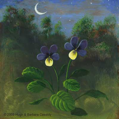 Eva Cassidy Artwork Moonlit Pansies